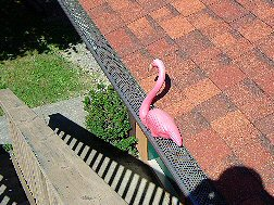 Flamingo in the Gutter